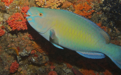 Mozambique Diving – All About Ponta do'Ouro
