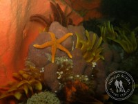 This Weekend's Dive Report: 10&11 March 2012