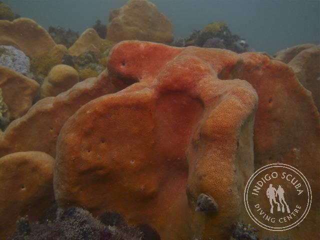 Orange Wall Sponges