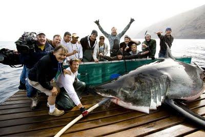Shark Men Series to Start Chumming in False Bay Today!