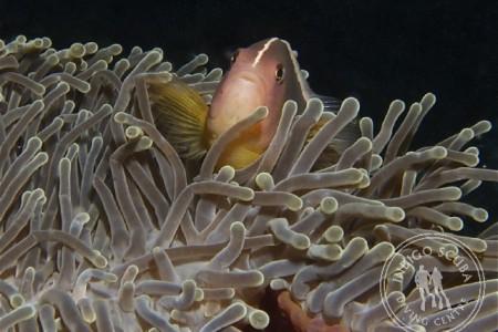 Dive Trip Report – Ponta do'Ouro 2012