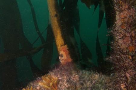 Dive Report:  9 – 11 November 2012