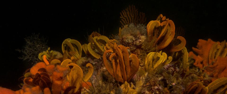 Gordons Bay Dive Sites