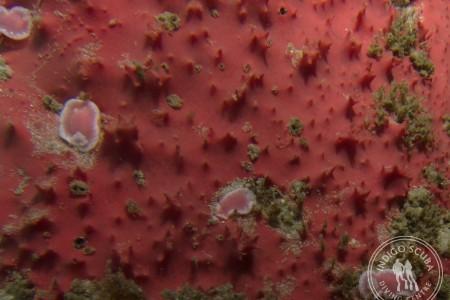 Rare Protea Dorid Found at Stone Dog!