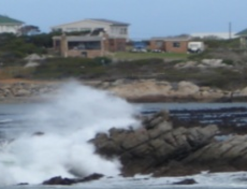 Proposed Ban on Diving in Betty's Bay – Update
