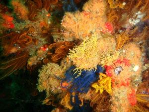 Marine Invertebrates on Ark rock