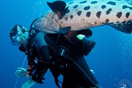 Secrets Revealed:  How To Take Really Great Photos of Scuba Divers