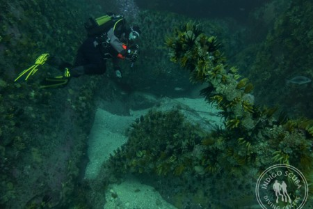 Weekend Dive Report:  Tropical Diving in Simon's Town!