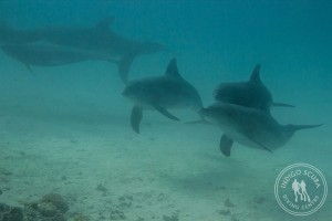 Dolphins on or checkout dive
