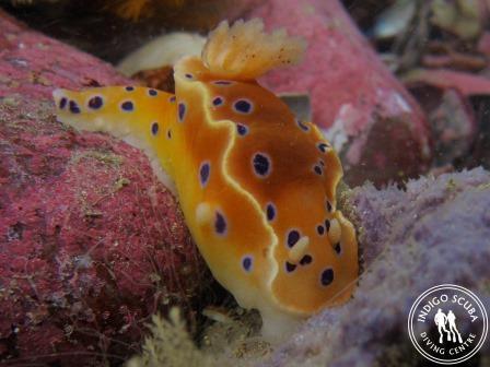 Dive Site Spotlight:  Cow and Calf, Gordon's Bay