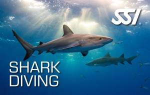Shark Diving specialty course