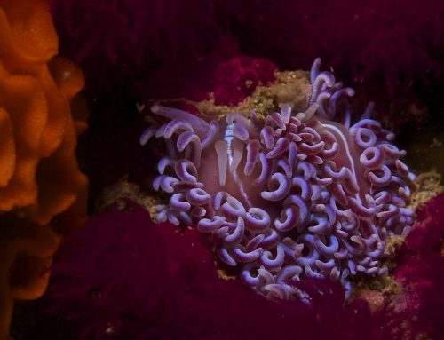 Gordon's Bay's Top 10 Nudibranchs