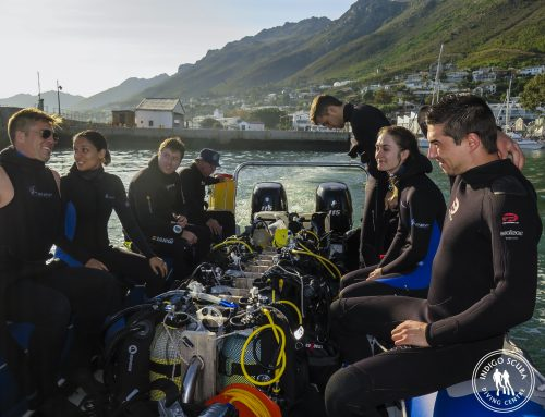 When is the best time to dive in Gordon's Bay?