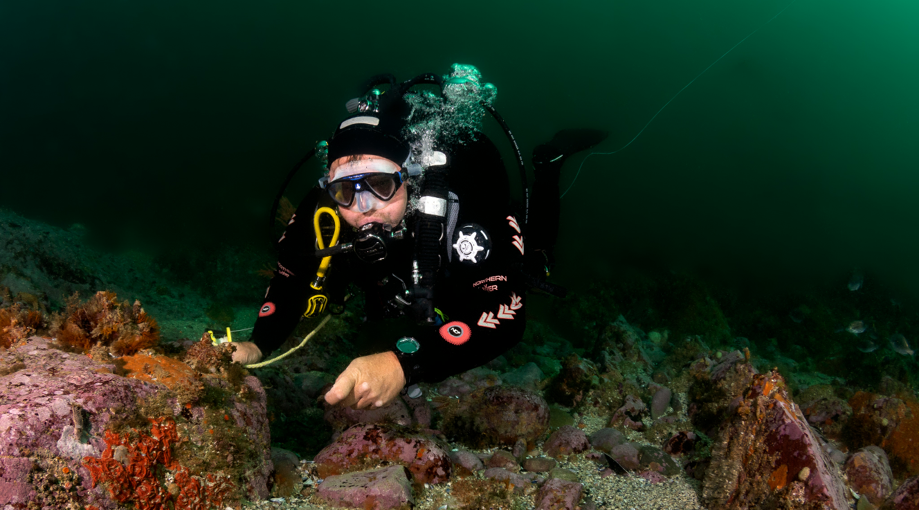 Indigo Scuba Gordon's Bay: Cape Town Scuba Diving Courses