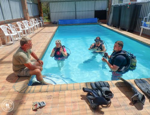 Why you should do a Try Scuba Session at Indigo Scuba