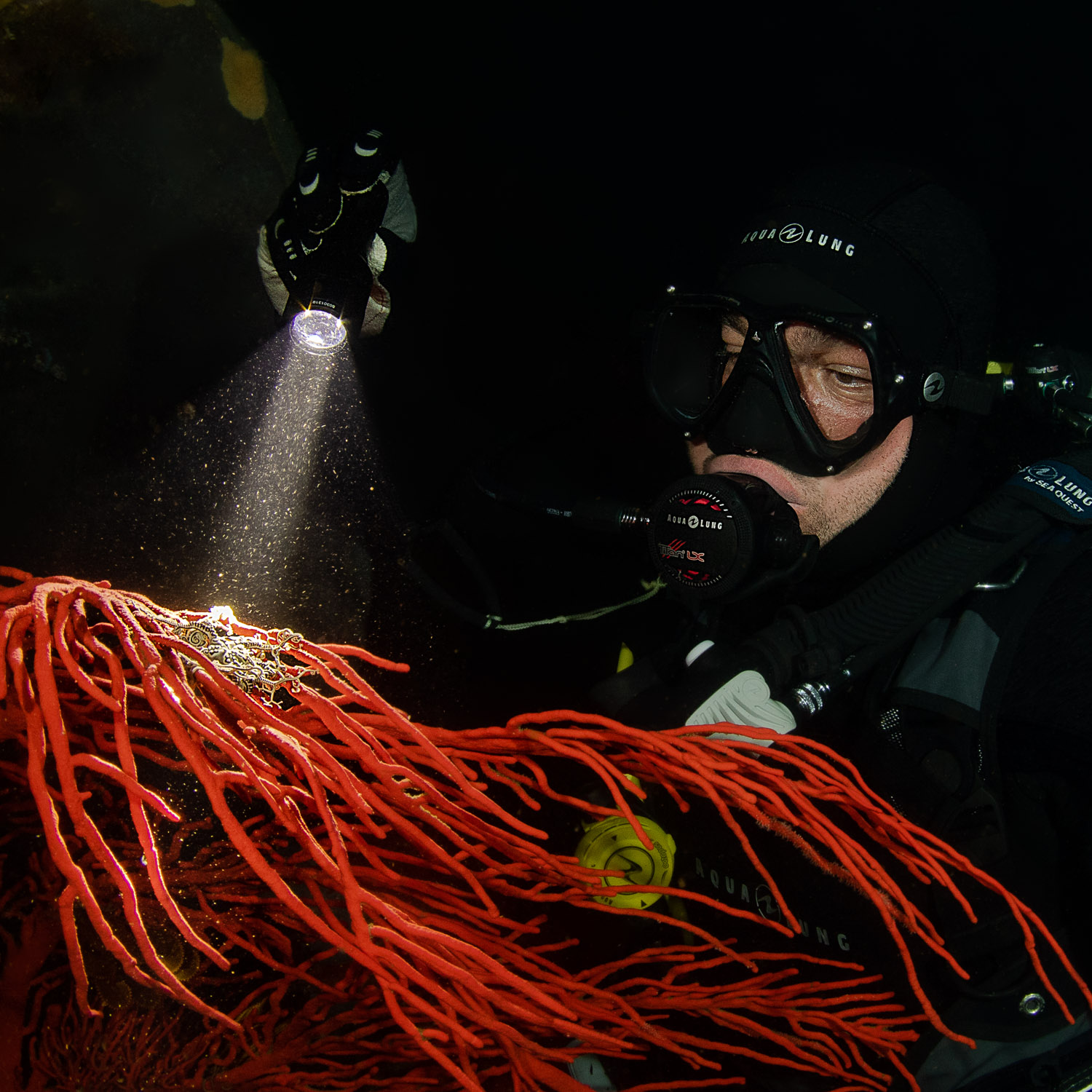 Night Diving and Limited Visibility