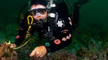dive-guide-course