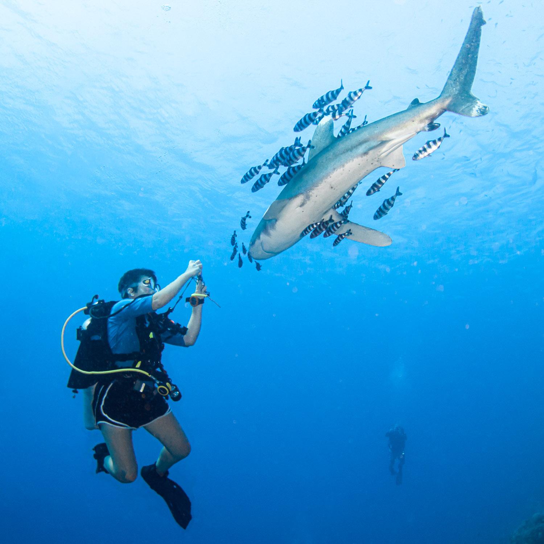 shark-diver-course