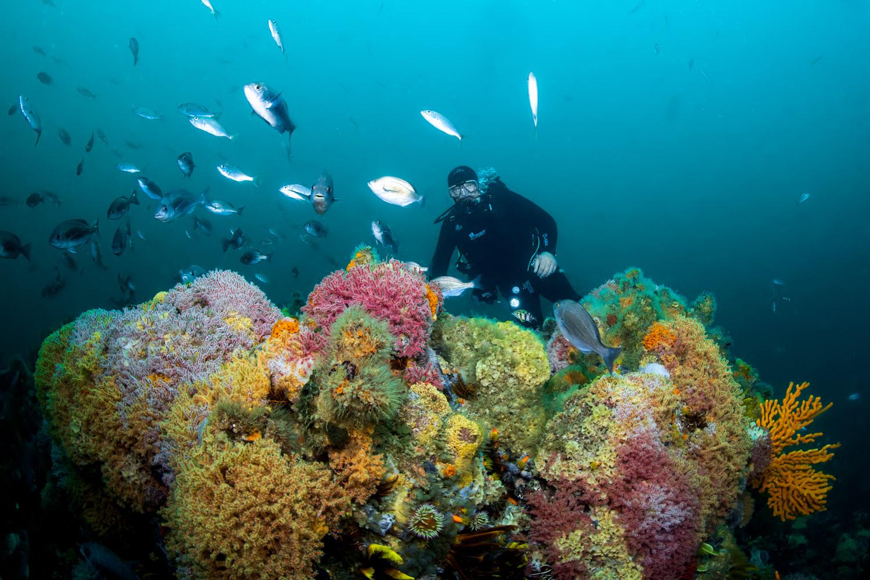 scuba-diving-scuba-courses