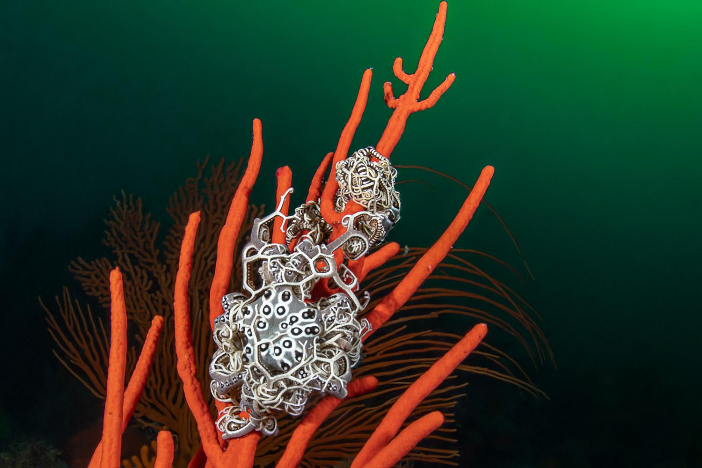 basket-starfish-sterretjies-reef
