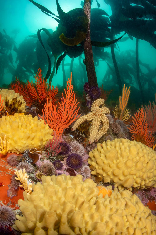 scuba-diving-rooi-els