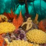 Explore beautiful kelp forests
